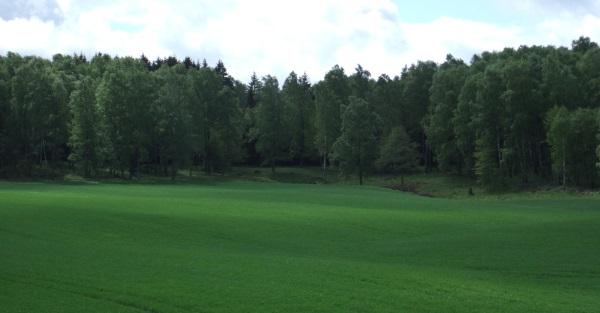 Buchenwälder von Åkulla